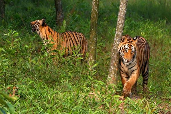 390 species threatened in Bangladesh