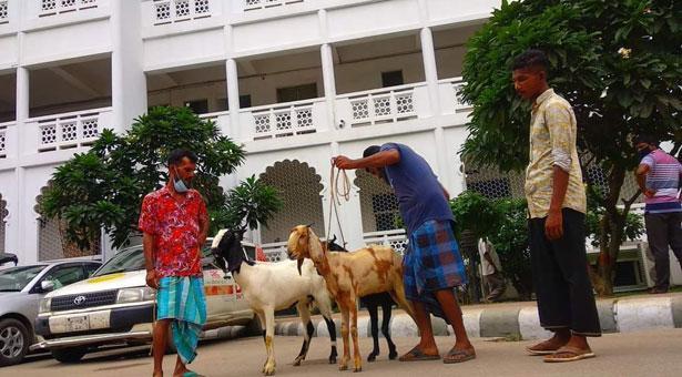 সুপ্রিম কোর্ট প্রাঙ্গণে ছাগল বিক্রি: নিরাপত্তা কর্মীদের শোকজ
